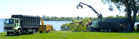 Our services include Tree Trimming, Tree Removal, Storm Damage, Tiebolting & Cabling, and more...